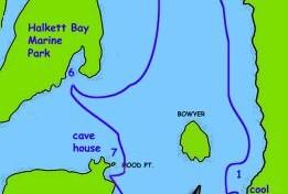 Howe Sound marine wildlife tour