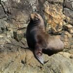 Sept 3 Carmen Sea Safari 007